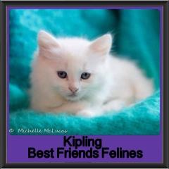2017 - Adopted - Kipling