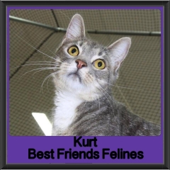 2017 - Adopted - Kurt