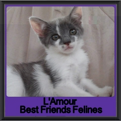 2017 - Adopted - Lamour