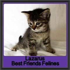 2017 - Adopted - Lazarus