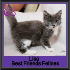 2017 - Adopted - Lisa