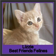 2017 - Adopted - Lizzie