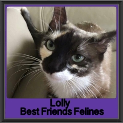 2017 - Adopted - Lolly