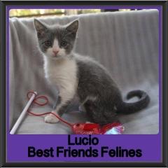 2017 - Adopted - Lucio
