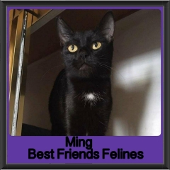 2017 - Adopted - MIng