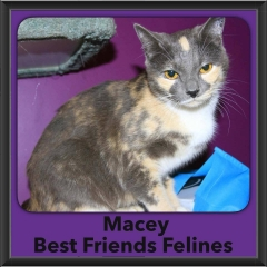 2017 - Adopted - Macey