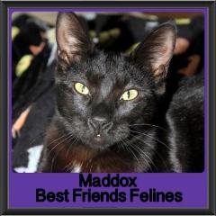 2017 - Adopted - Maddox (2)