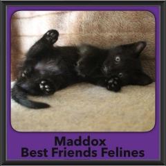 2017 - Adopted - Maddox