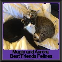 2017 - Adopted - Magic & Aurora