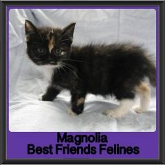2017 - Adopted - Magnolia