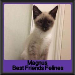 2017 - Adopted - Magnus