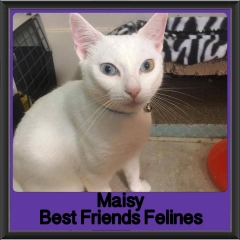 2017 - Adopted - Maisy