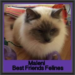 2017 - Adopted - Maleni