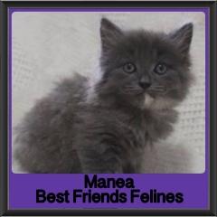 2017 - Adopted - Manea