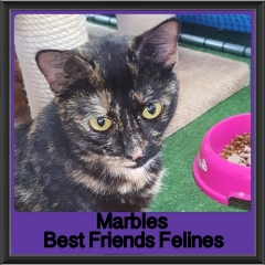 2017 - Adopted - Marbles