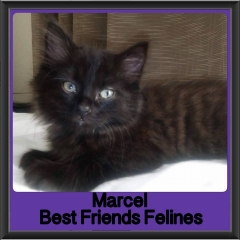 2017 - Adopted - Marcel