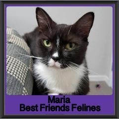 2017 - Adopted - Maria
