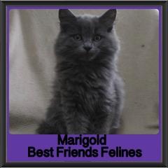2017 - Adopted - Marigold