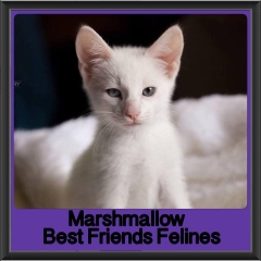 2017 - Adopted - Marshmallow