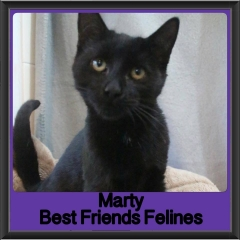 2017 - Adopted - Marty