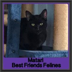 2017 - Adopted - Matari