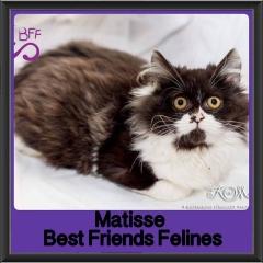 2017 - Adopted - Matisse