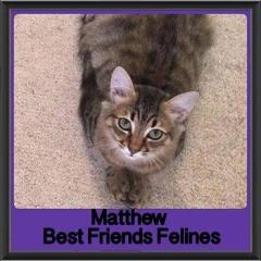 2017 - Adopted - Matthew