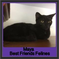 2017 - Adopted - Maya