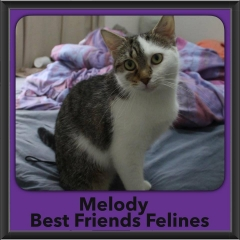 2017 - Adopted - Melody