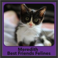 2017 - Adopted - Meredith