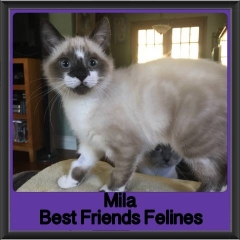 2017 - Adopted - Mila