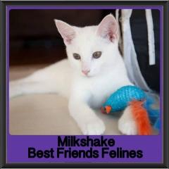 2017 - Adopted - Milkshake