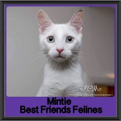 2017 - Adopted - Mintie