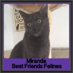 2017 - Adopted - Miranda