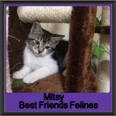 2017 - Adopted - Mitsy