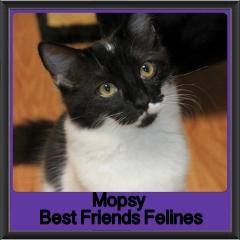 2017 - Adopted - Mopsy