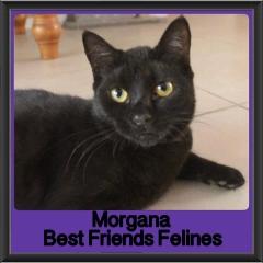 2017 - Adopted - Morgana