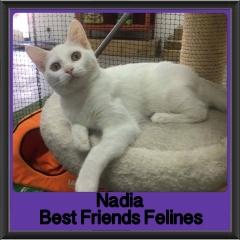2017 - Adopted - Nadia