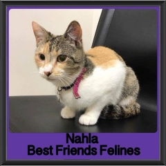 2017 - Adopted - Nahla