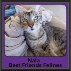 2017 - Adopted - Nala