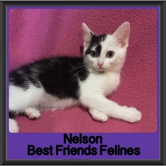 2017 - Adopted - Nelson