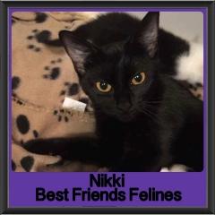 2017 - Adopted - Nikki