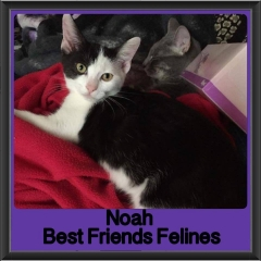 2017 - Adopted - Noah