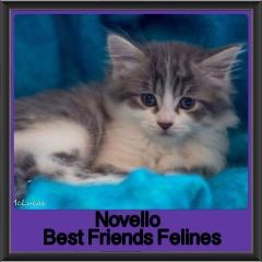 2017 - Adopted - Novello