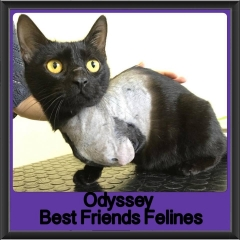 2017 - Adopted - Odyssey