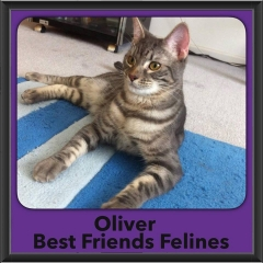 2017 - Adopted - Oliver