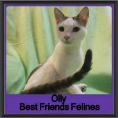 2017 - Adopted - Olly