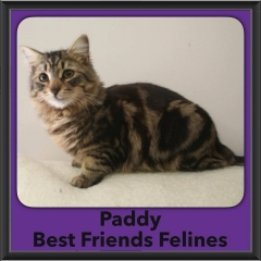 2017 - Adopted - Paddy