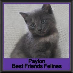2017 - Adopted - Payton