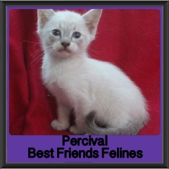 2017 - Adopted - Percival